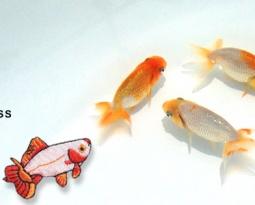 Goldfish A symbol of summer coolness